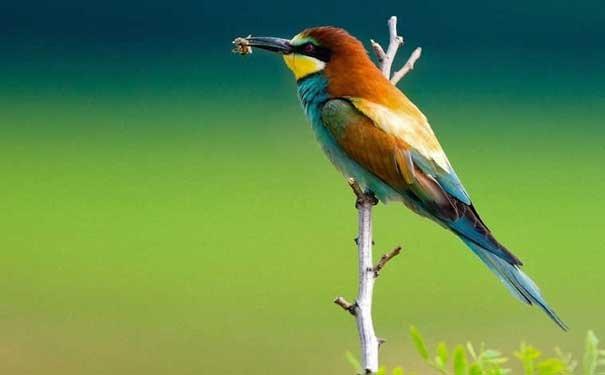紫蓝金刚鹦鹉的生活环境要求
